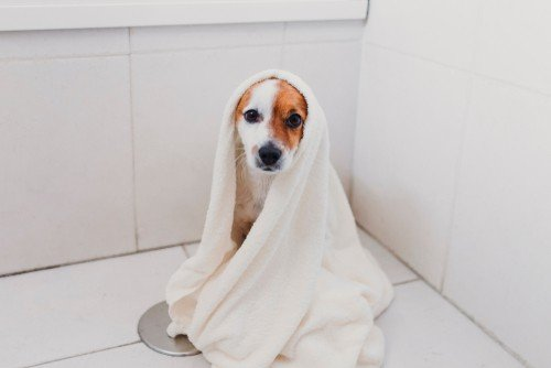 How to bathe a dog - Get towels ready before you get the dog wet
