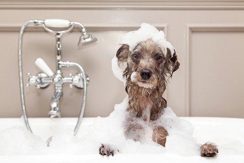 How to bathe a dog - use gentle shampoo