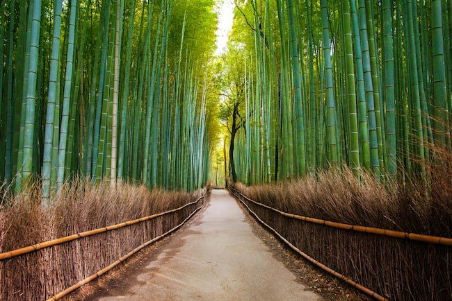 Bamboo bathroom accessories create a Zen-like feel