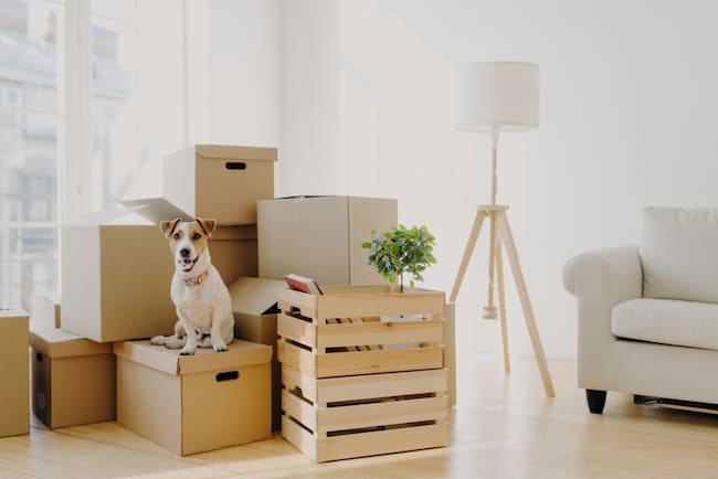 A dog sits on a pile of storage boxes