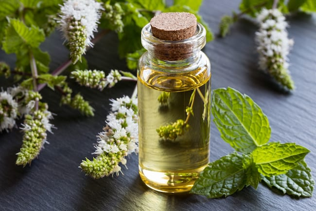 Peppermint oil is one of the best essential oils for a cold