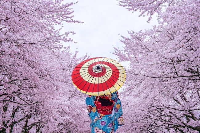 the back of a woman walking through cherry blossoms wearing a kimono and holding a parasol